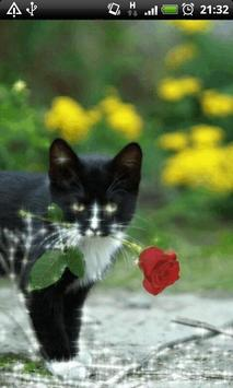 Cat With Rose Live Wallpaper screenshot 3