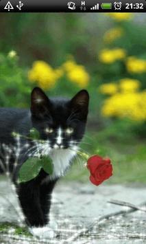 Cat With Rose Live Wallpaper apk screenshot