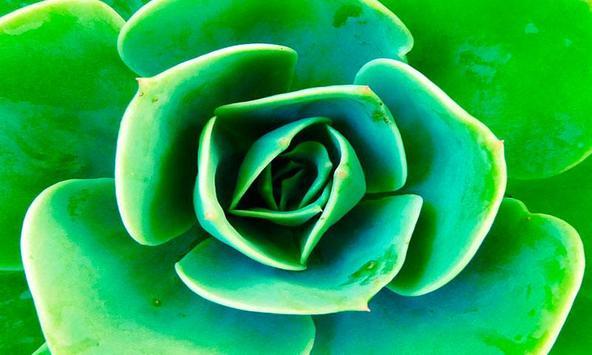 Memory Beautiful Flowers screenshot 3
