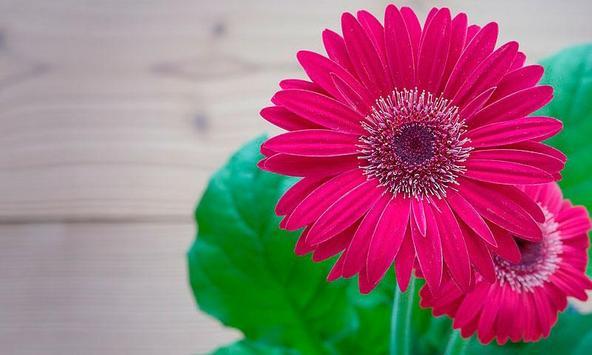 Memory Beautiful Flowers poster