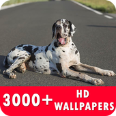 Great Dane Live Wallpapers HD icon