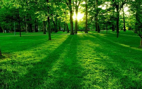 ... Green Nature HD Wallpaper apk screenshot ...
