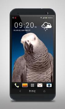 Grey Parrot Live Wallpaper screenshot 1