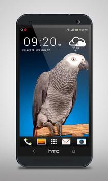 Grey Parrot Live Wallpaper screenshot 2