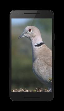 Dove 3D poster