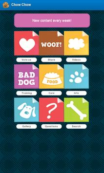 Chow Chow Dogs poster