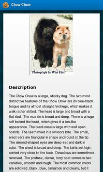 Chow Chow Dogs apk screenshot