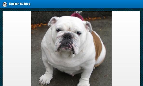 English Bulldog screenshot 8