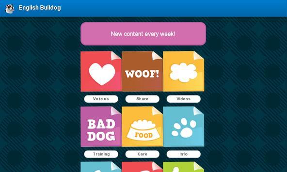 English Bulldog screenshot 9