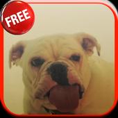 Dog Licking Screen HD LWP icon