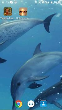 Dolphins Live Video Wallpaper screenshot 5