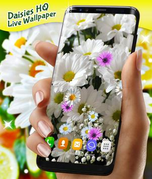 Daisies HQ Live Wallpaper poster