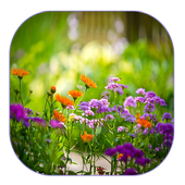 Summer Garden Live Wallpaper icon