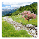 Mountain River Live Wallpaper APK Android