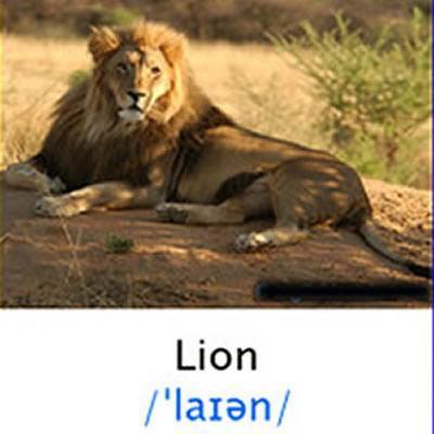 43++ Hewan hewan buas dalam bahasa inggris terbaru