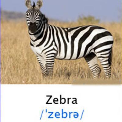 Nama Binatang Bahasa Inggris For Android Apk Download