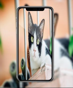 HD Camera Pro - Hd Photo For iphone X poster