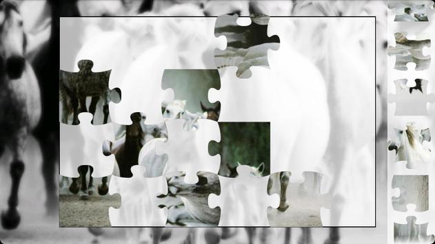 Puzzle Horses apk screenshot