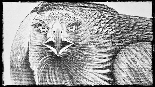 Easy and realistic pencil drawings screenshot 2