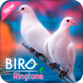 Ringtones 2018: Birds Sounds Ringtones