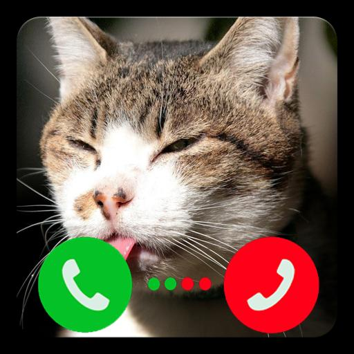 Call Video Funny Cat Prank For Android Apk Download