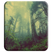 Beautiful Forest Theme icon