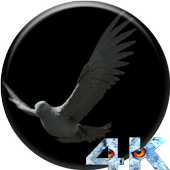 Eagle 3D Video LWP icon