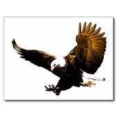 Eagle HD Wallpaper icon
