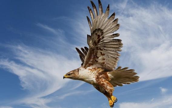 Eagle HD Wallpaper apk screenshot