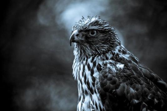Eagle HD Wallpaper poster