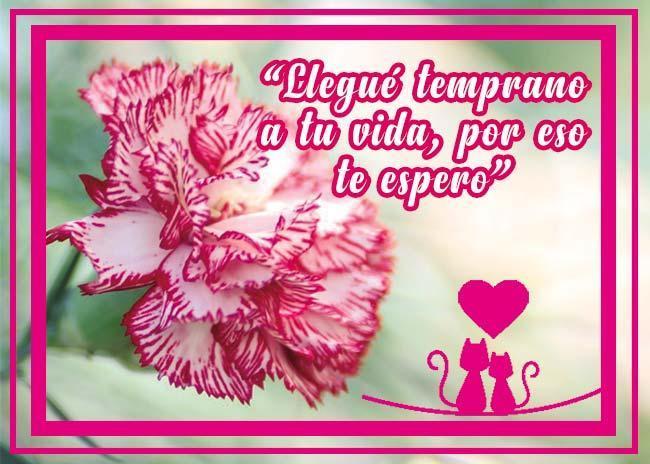 Lindas Frases De Amor Con Hermosos Claveles For Android