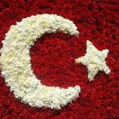 Türk Bayrağı ve Bozkurt Duvar Kağıtları icon
