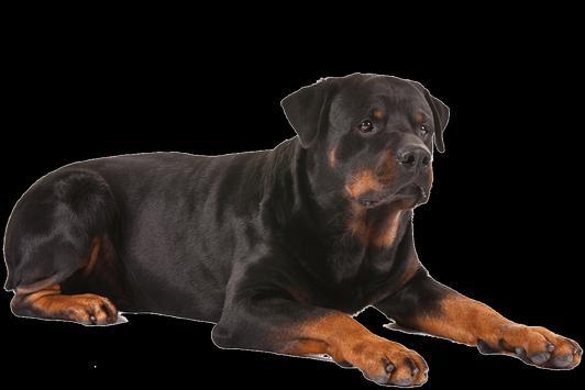 Silbato para ahuyentar perros - Repelente poster