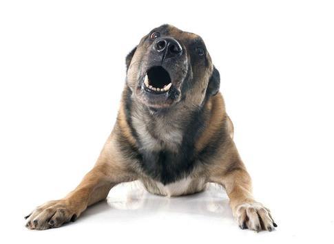 Silbato para ahuyentar perros - Repelente screenshot 1