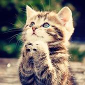 KittyCat Image Generator icon