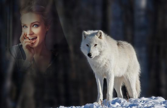 wolf photo frames apk screenshot - Wolf Picture Frames