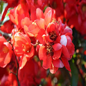 flower lovely icon