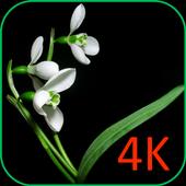 Flowers On Black VWallpaper icon