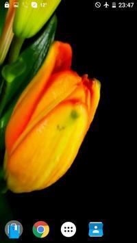 Flowers On Black VWallpaper screenshot 1