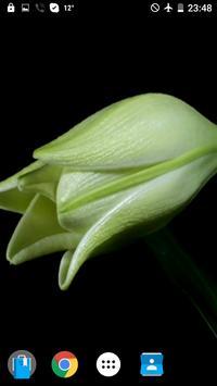 Flowers On Black VWallpaper screenshot 2