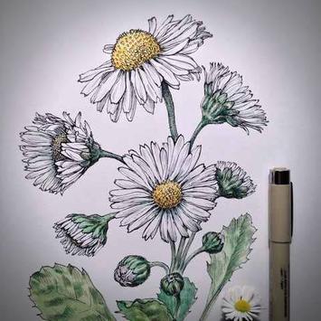 Flower Sketches screenshot 5