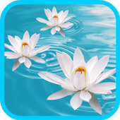 Flowers Life Video Wallpaper icon