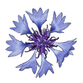 Pocket Flora icon