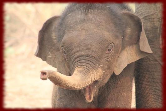 Baby Elephants wallpapers screenshot 1