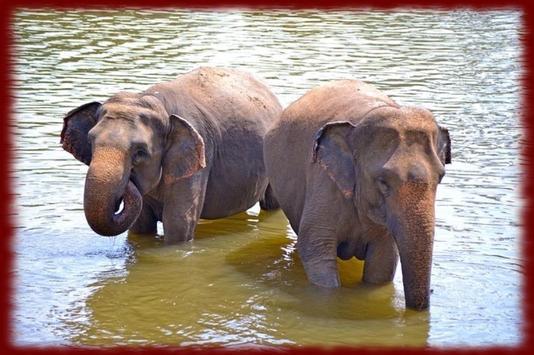 Baby Elephants wallpapers screenshot 2