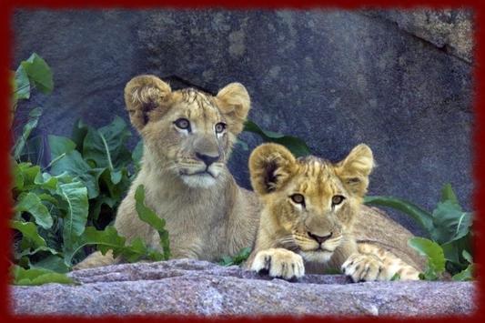 Baby Lion Cubs wallpapers screenshot 2