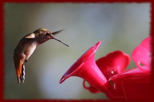 Hummingbirds wallpapers screenshot 1