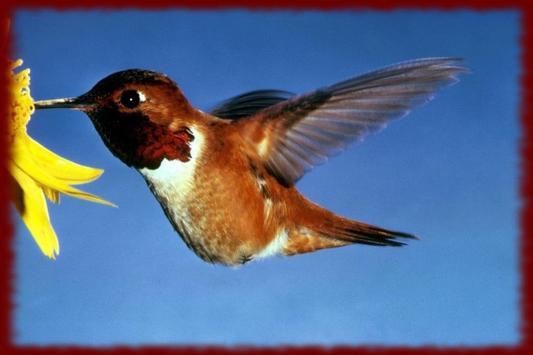 Hummingbirds wallpapers screenshot 2