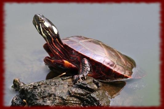 Painted Turtles wallpapers poster