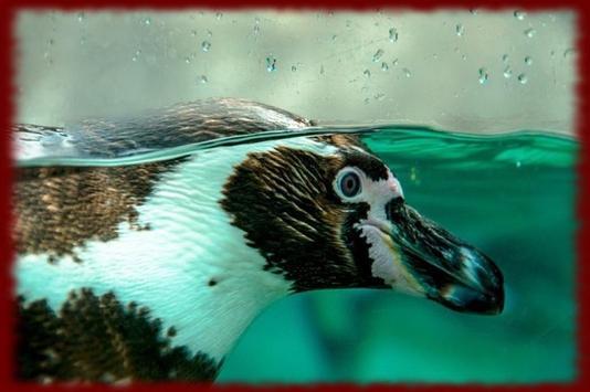 Penguins wallpapers apk screenshot